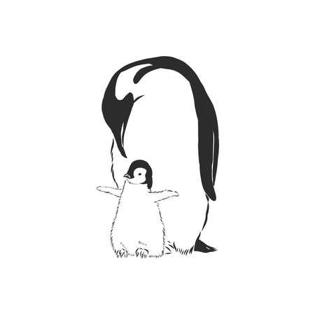 Hand drawing penguins. Vector illustration