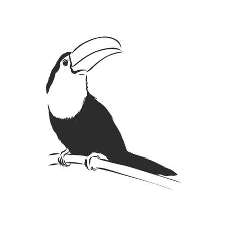 toucan hand drawn vector llustration realistic sketch, Toucan bird, vector sketch illustration Illusztráció
