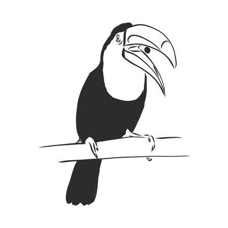 toucan hand drawn vector llustration realistic sketch Illusztráció