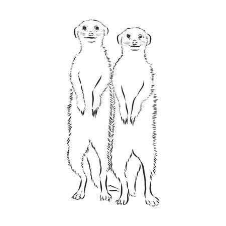 meerkat icon. animal sign. meerkat animal, vector sketch illustration Illustration