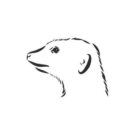 meerkat icon. animal sign. meerkat animal, vector sketch illustration 矢量图像