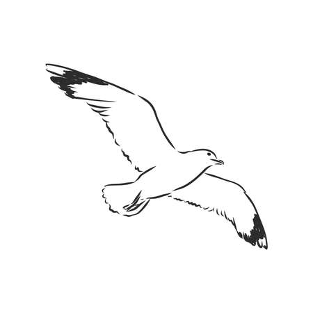 Seagull bird animal sketch engraving vector illustration. Scratch board style imitation. Hand drawn image.