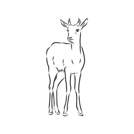 antelope sketch vector graphics black and white drawing 向量圖像