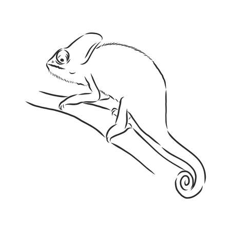 Sketch of chameleon. Hand drawn vector illustration. chameleon animal, vector sketch illustration