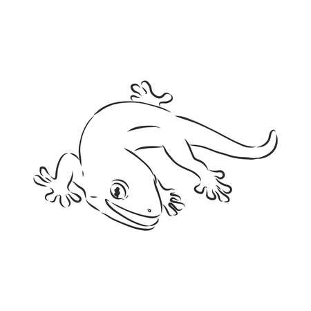 Vector hand drawn doodle sketch gecko lizard isolated on white background. Gecko animal, vector sketch illustration