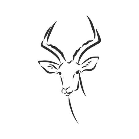 antelope sketch graphics black and white drawing