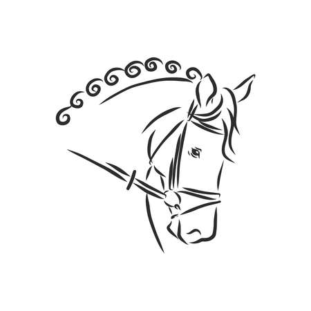 image of a horse head design on white background 矢量图像
