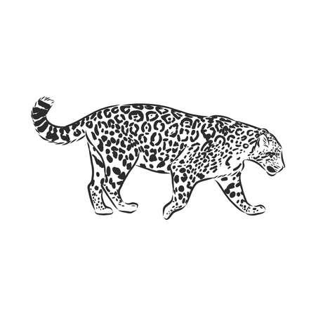 Jaguar. Hand drawn sketch illustration isolated on white background Векторная Иллюстрация