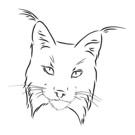 Hand drawn sketch style portrait of lynx isolated on white background. Vector illustration.