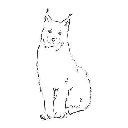 Lynx. Wild cat. Predator. Hand drawn. Black and white Stylized Decorative Vector