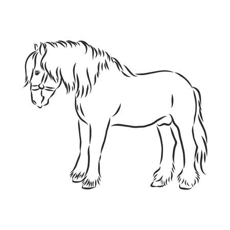 hand-drawn silhouette of a prancing heavy - harnessed white horse on a white background Ilustração