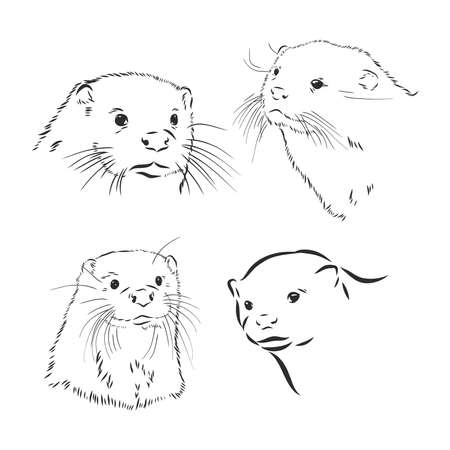 Hand drawn sketch of a smooth coated otter or aonyx cinerea or asian small clawed otter  イラスト・ベクター素材