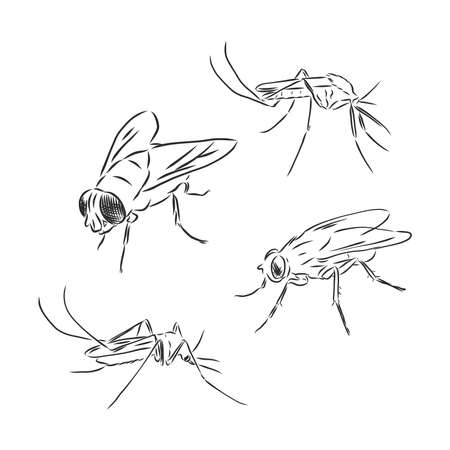 Vector collection of various positioned doodle flies and mosquitoes.