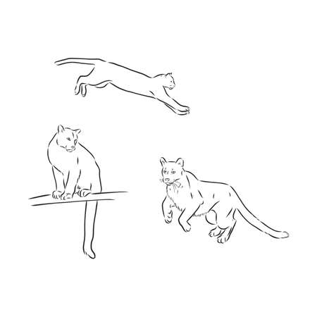 Hand-drawn ink vector drawing. Wild animal cougar in full growth side view. Nature, predator, puma. Illustration