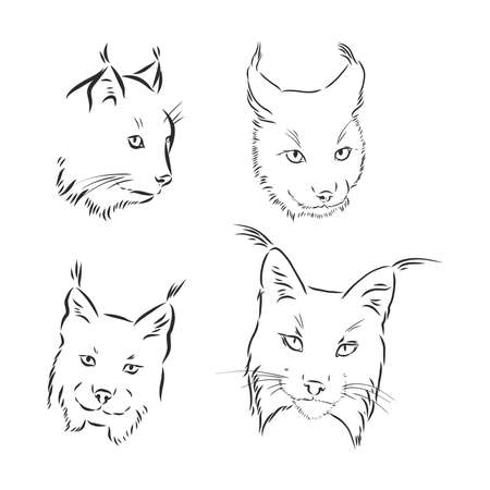 lynx head black and white sketch vector Illustration