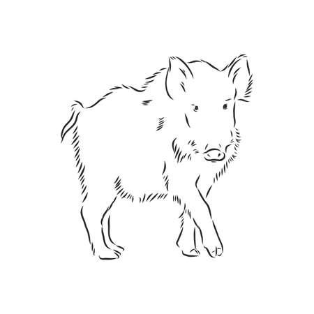 Sketch grunge wild boar in the profile. Stock vector illustration.