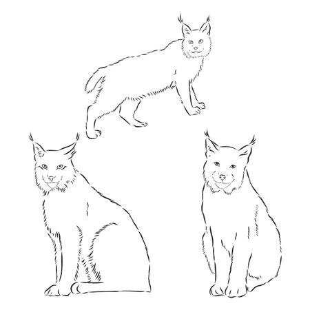 sitting lynx design - wild bobcat black and white vector outline Illustration