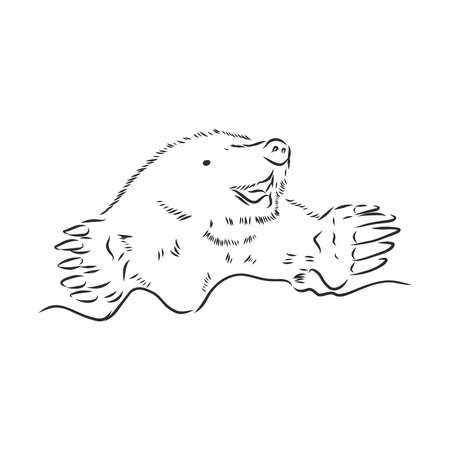 Mole. Sketch Engraving style Vector illustration Illustration