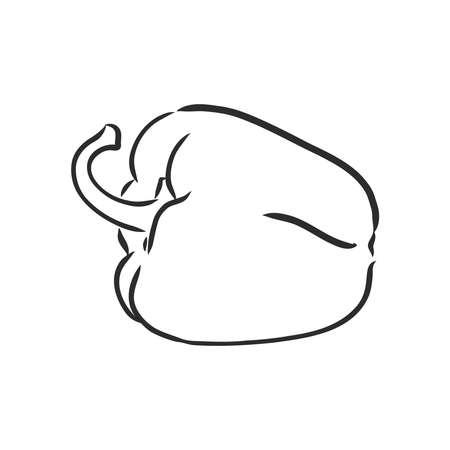 Sweet pepper. Vector hand drawn vegetables isolated on white background. bell pepper, vector sketch illustration