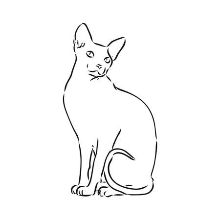 sketch of a sphinx cat, isolated, on a white background. sphinx cat, vector sketch on a white background 向量圖像