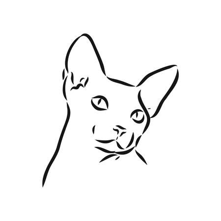 sketch of a sphinx cat, isolated, on a white background. sphinx cat, vector sketch on a white background