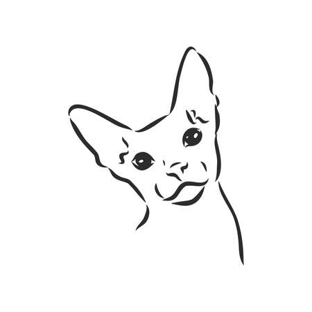 sketch of a sphinx cat, isolated, on a white background. sphinx cat, vector sketch on a white background Vetores