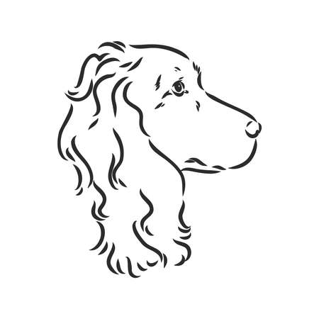 Decorative portrait of standing in profile English Springer Spaniel, vector isolated illustration in black color on white background. spaniel, vector sketch on a white background