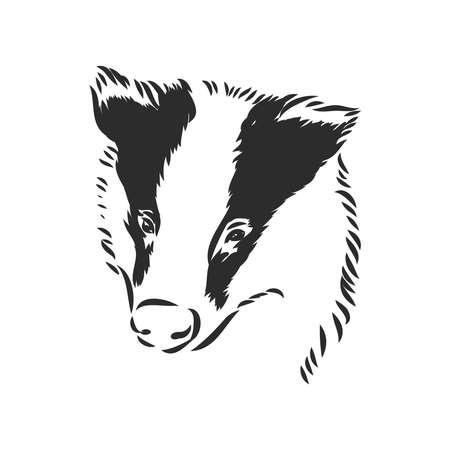 european badger - animal illustration. badger, vector sketch on a white background Ilustração