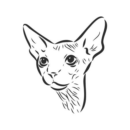 Vector illustration of a sphynx cat with a liner isolated on a white background. For printing on clothes, paper, icon