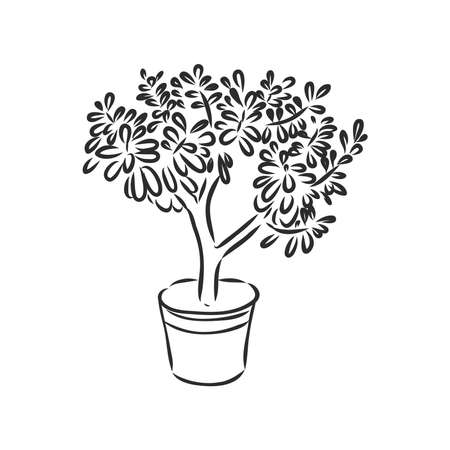 Pot plants set, vector illustration flowers in pots drawn black line on a white background, hand-drawn design elements.