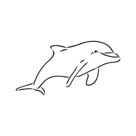 simple dolphin silhouette dolphin, vector sketch on a white background