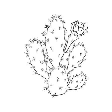 cactus in desert vector and illustration, black and white, hand drawn, sketch style, isolated on white background. cactus vector sketch on a white background