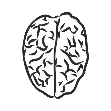 Brain of the person for medical design. Vector sketch.