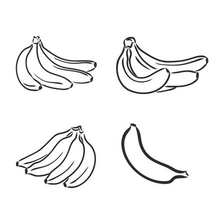 Bananas set, vector hand drawing. bananas, vector sketch on a white background