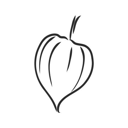 Physalis auto traced vector sketch, grey scale. physalis, vector sketch on a white background