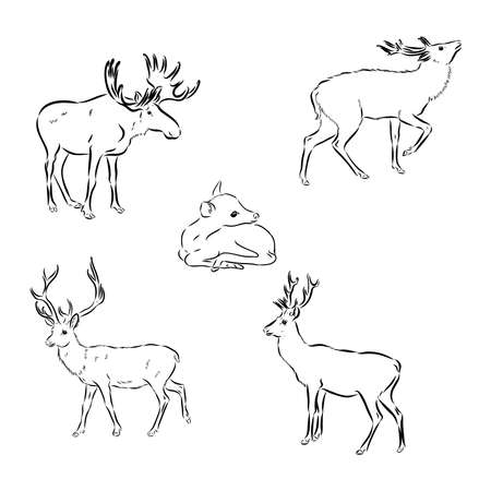 Deer hand draw, isolated on background 矢量图片