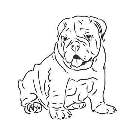Line art of dog with three difference of face bulldog vector sketch Vektorgrafik