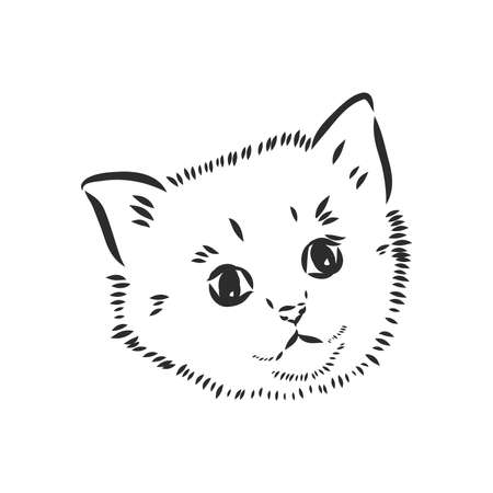 Vector sketch of a stylized kittens face Ilustração Vetorial