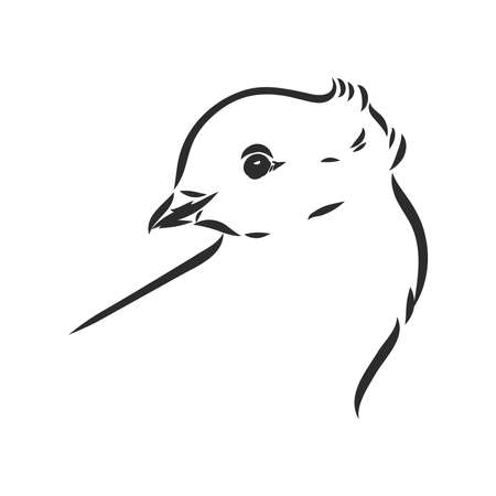 Realistic hand drawn dove. Vector illustration or element for your design. Vettoriali