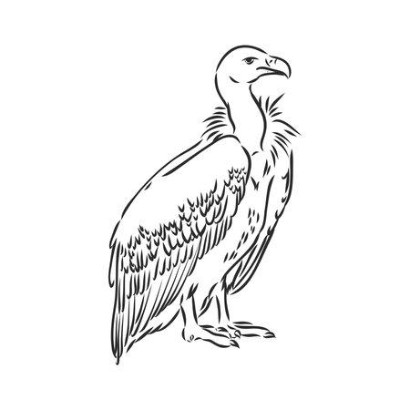Vulture illustration line art vector