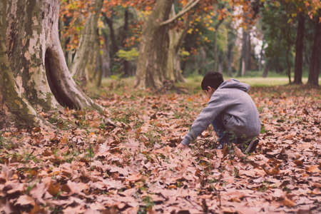 Boy playing with leaf in autumn