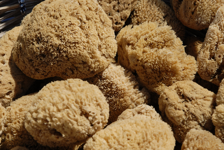 Natural sponge Stock Photo