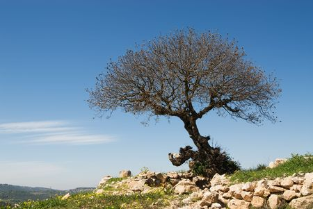 Einsamer Baum auf einem H�gel