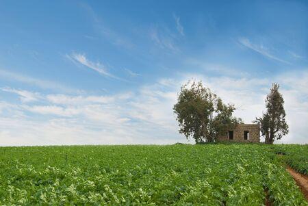 Altbau durch ein Feld