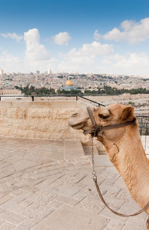 View over the Temple Mound in Jerusalem including The Dome Of The Rock Stock Photo