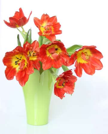 Red tulips flowers in a vase and loose, over white background
