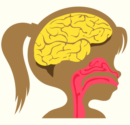 Vector illustration. Flat cartoon style. The head of a person with the image of the brain and nasopharynx. The scheme for children.