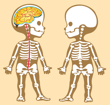 Vector illustration for children. Flat cartoon style. The human skeleton and the spinal cord. Stock Illustratie