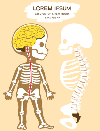 Vector illustration. Flat cartoon style. Silhouette of a child with the image of the skeleton, spine, spinal cord and brain. Textbook for children.