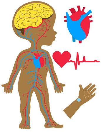 Vector illustration Flat cartoon style. Silhouette of a boy with an image of the brain, heart and circulatory system. Hand and pulse on it
